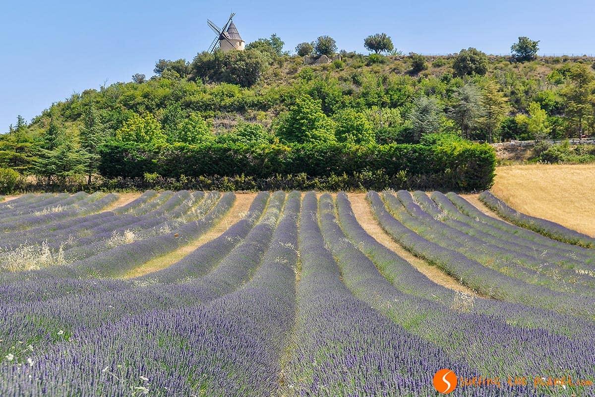 Campo de Lavanda cerca de Saint-Michel-de-l'Observatoire | Ruta de la lavanda en la Provenza