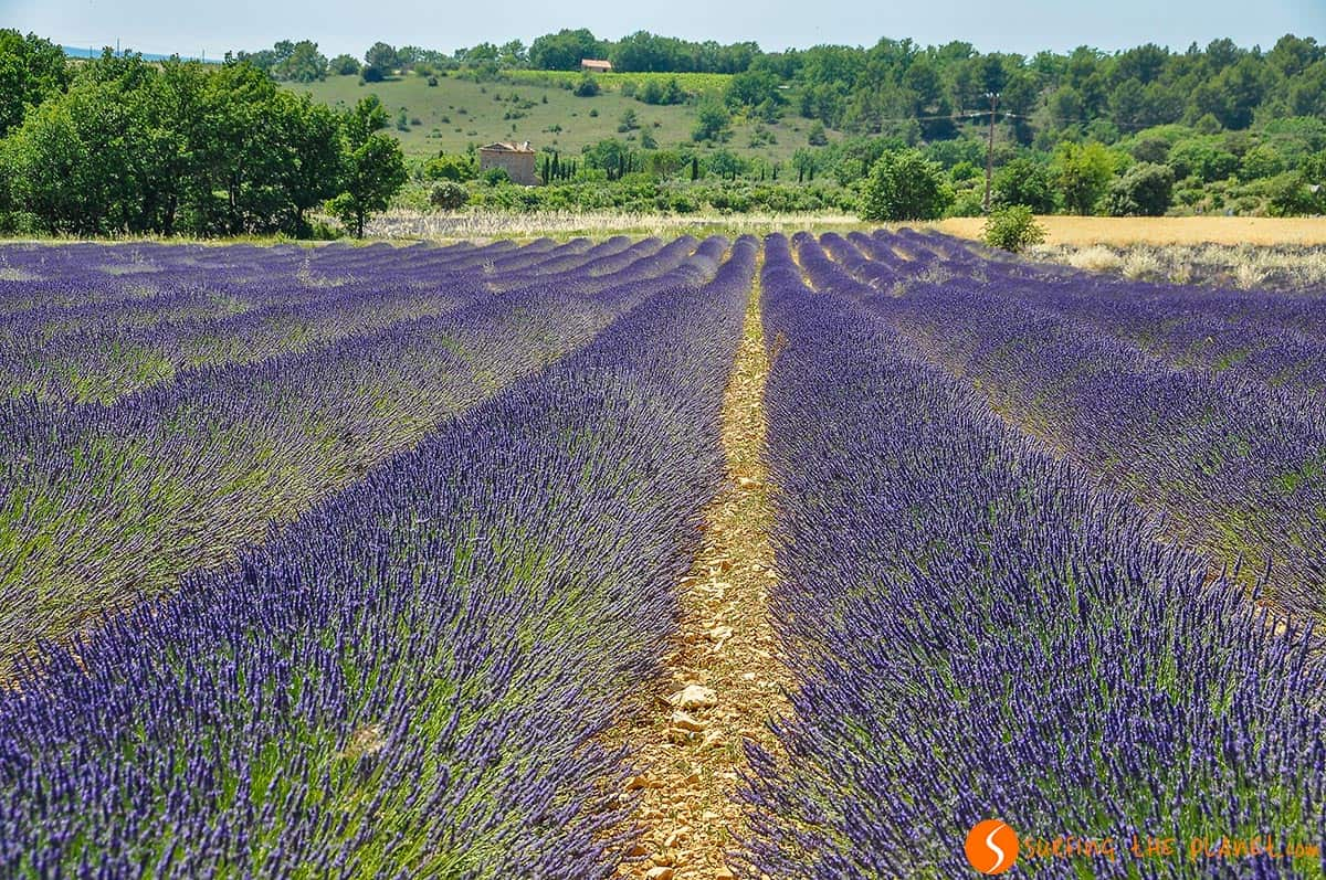 Lavender field near Apt | Lavender routes in Provence