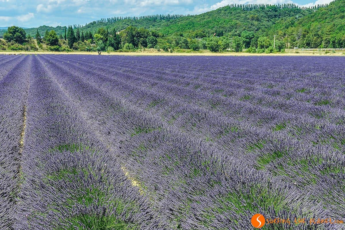 Lavender fields on the way to Grignan | Travel to Provence