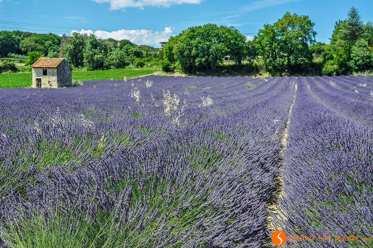 Lavender fields near Grignan | Route of the Lavender in Provence