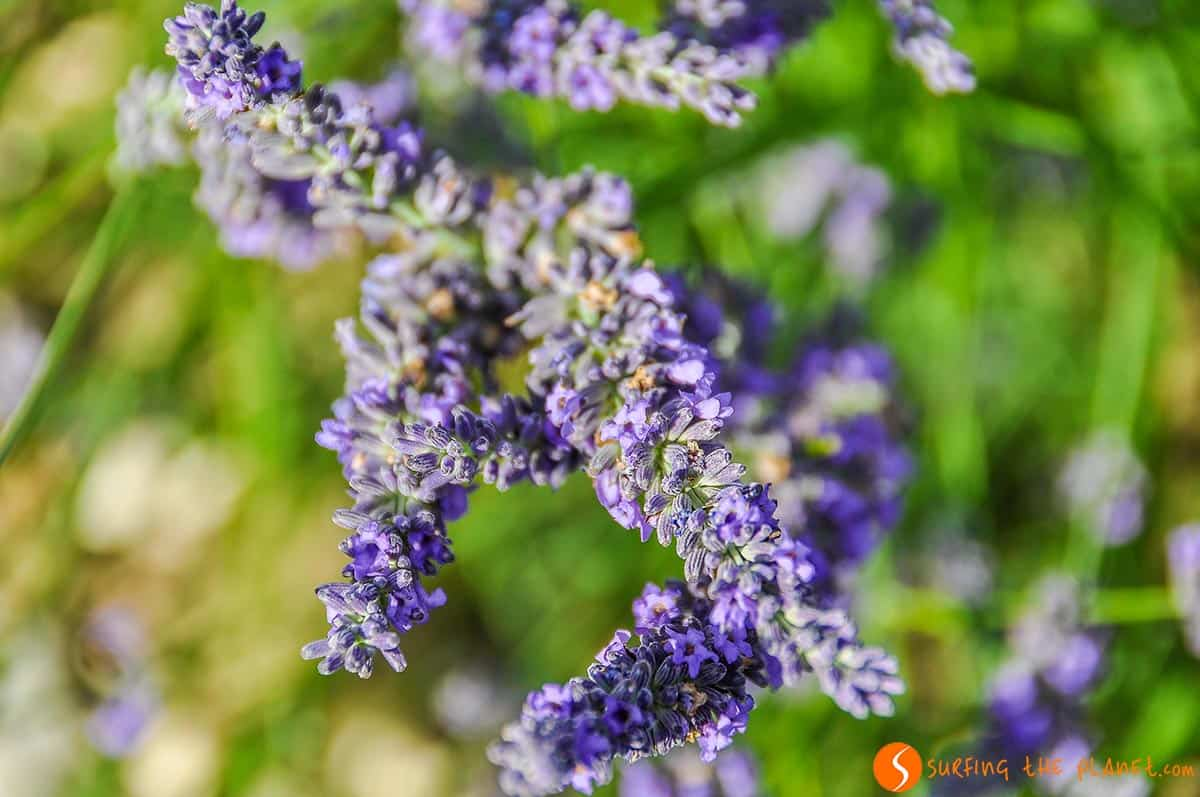 Lavender Route | Travel to Provence