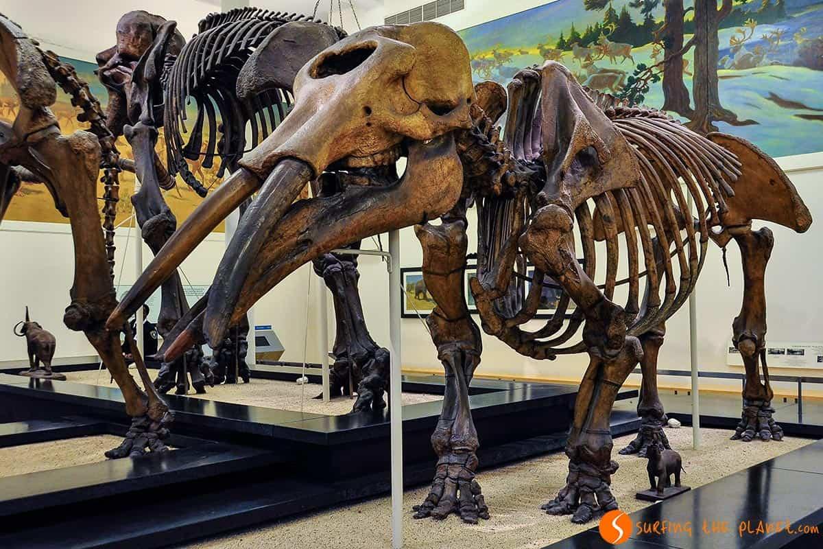 Qué visitar en Nueva York | Esqueletos de mamut en Natural History Museum