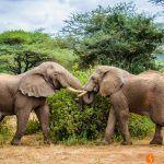 Safari en el Lago Manyara en Tanzania