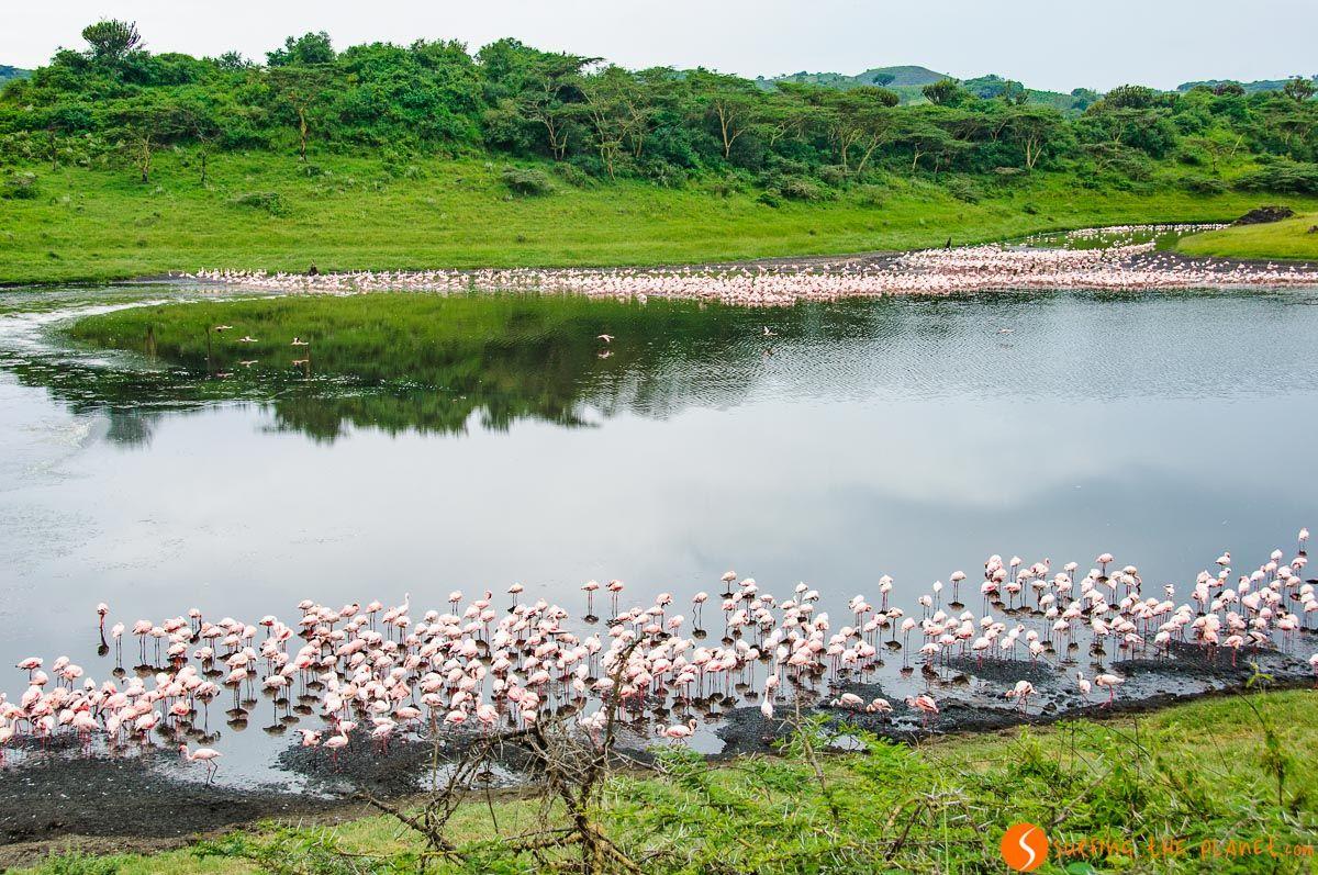 Flamencos, Parque Nacional de Arusha, Tanzania | Qué ver y hacer en Tanzania