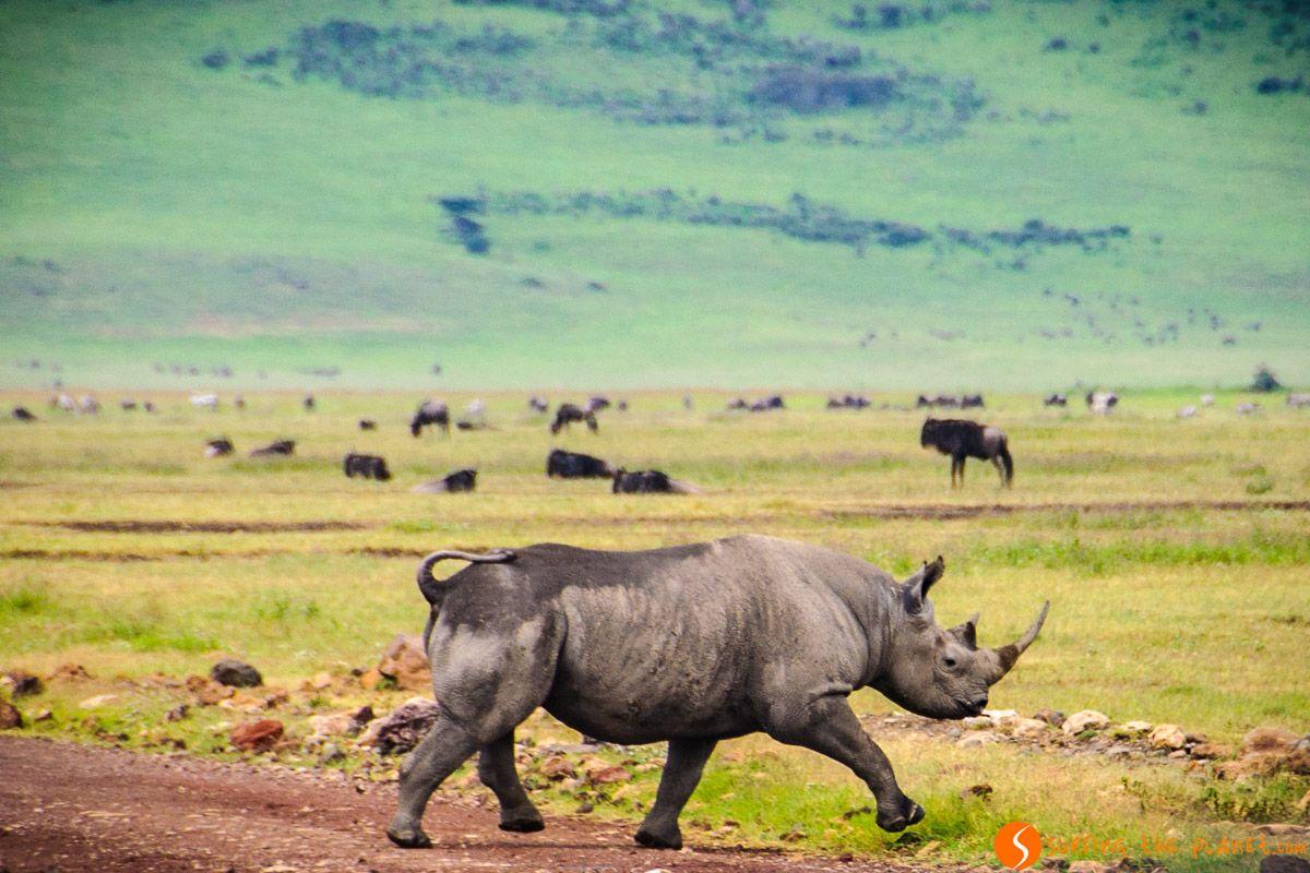 Rinoceronte, Área de Conservación de Ngorongoro, Tanzania