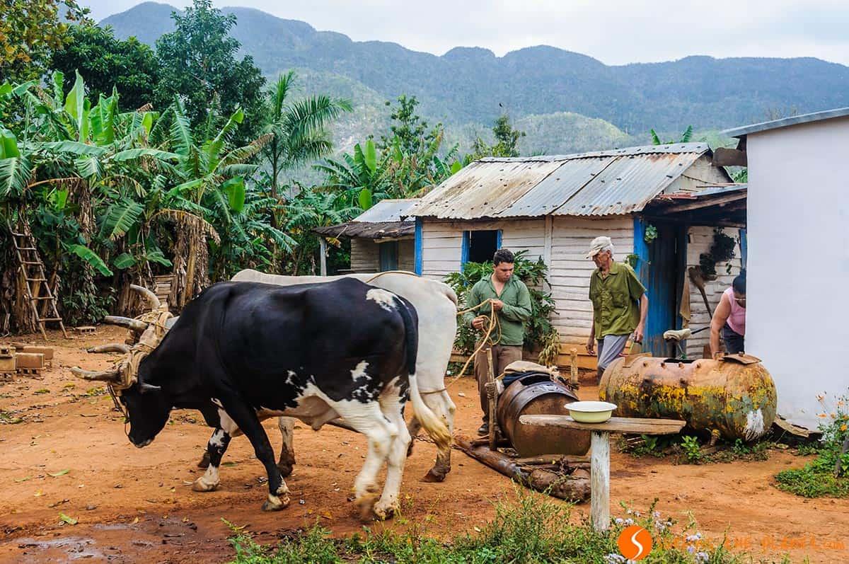 Casa típica en el Valle de Viñales, Viñales, Cuba