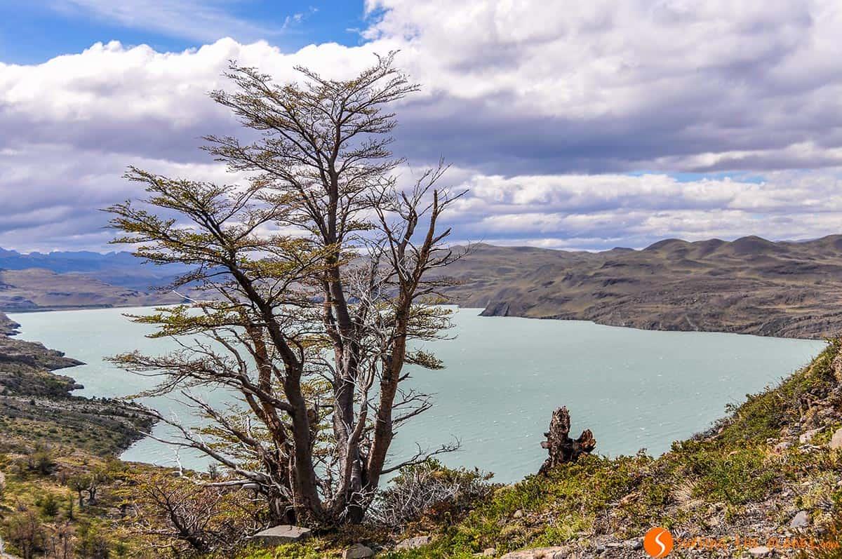 Árbol solitario, Torres del Paine, Chile | Viajar a Chile