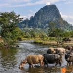 Mini travel guide to Laos, useful tips and information