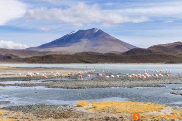 Grupo de flamingos, Altiplano Boliviano, Bolivia