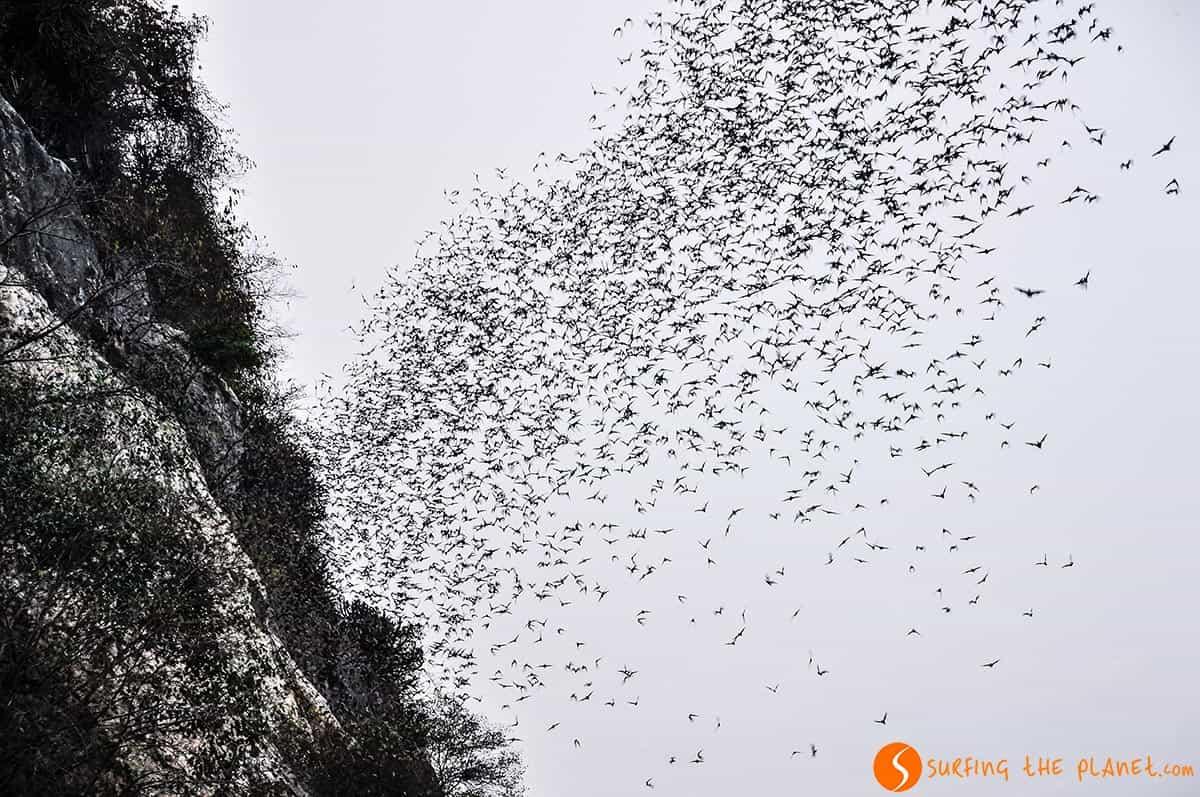 Murciélagos cerca de Battambang, Camboya