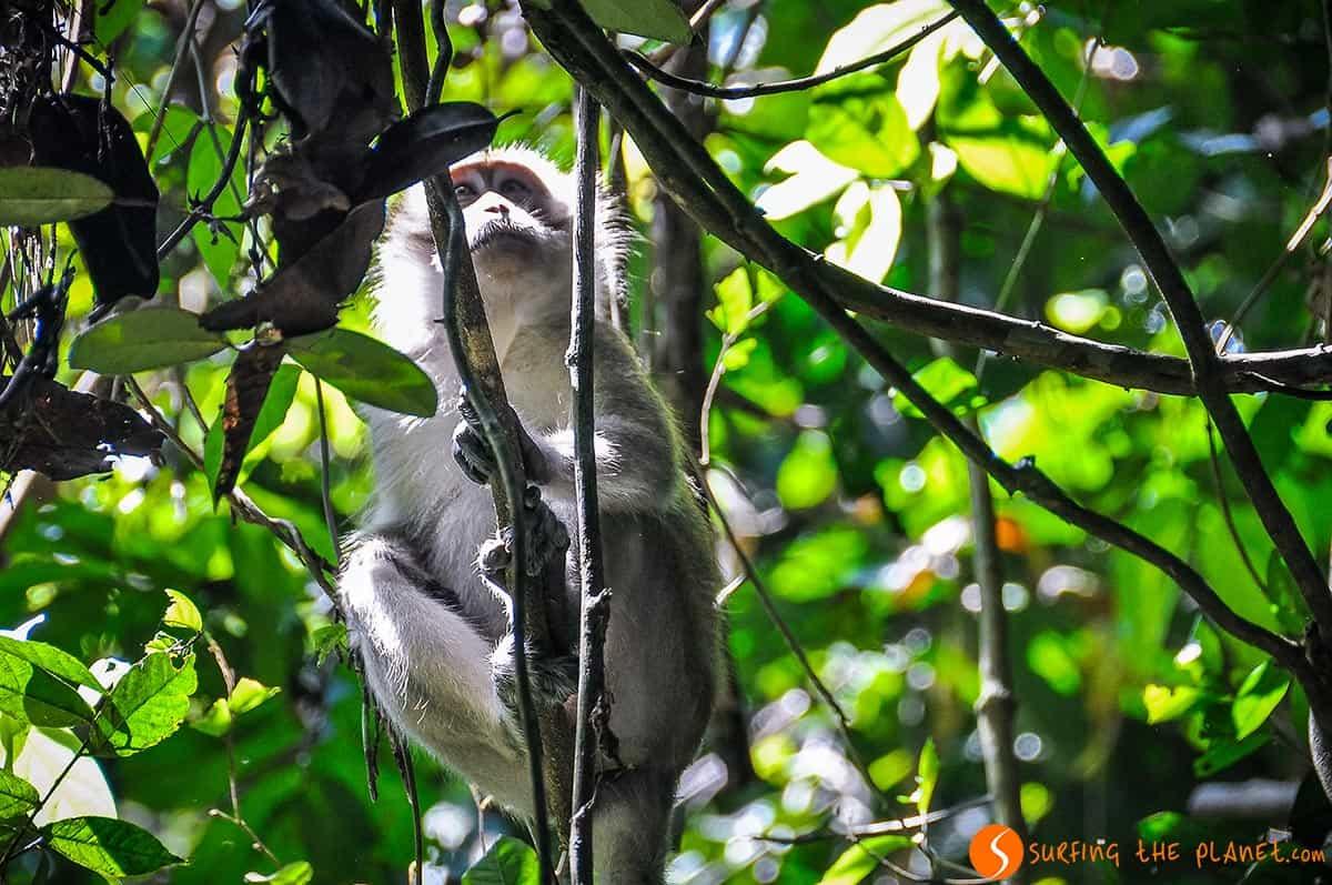 Mono, Taman Negara, Malasia