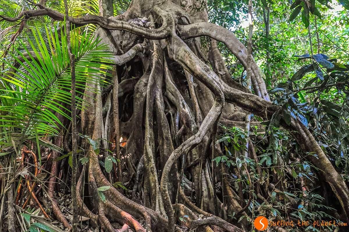 Selva tropical, Taman Negara, Malasia