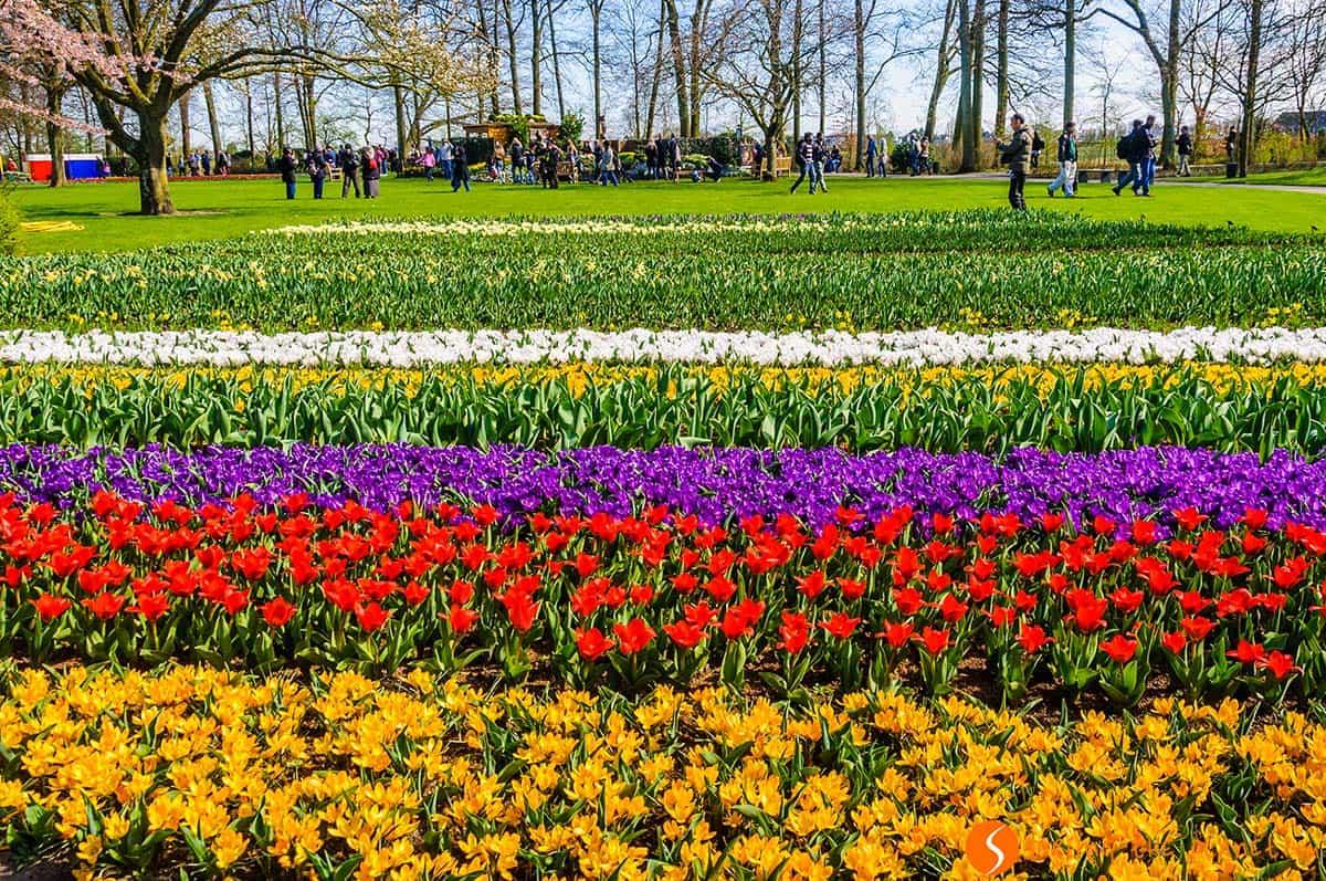 Tulip field, Keukenhof, Holland