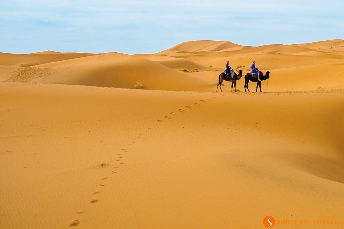 Dromedarios, Desierto de Merzouga, Marruecos