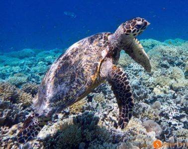 Tortuga marina, Gili Meno, Indonesia