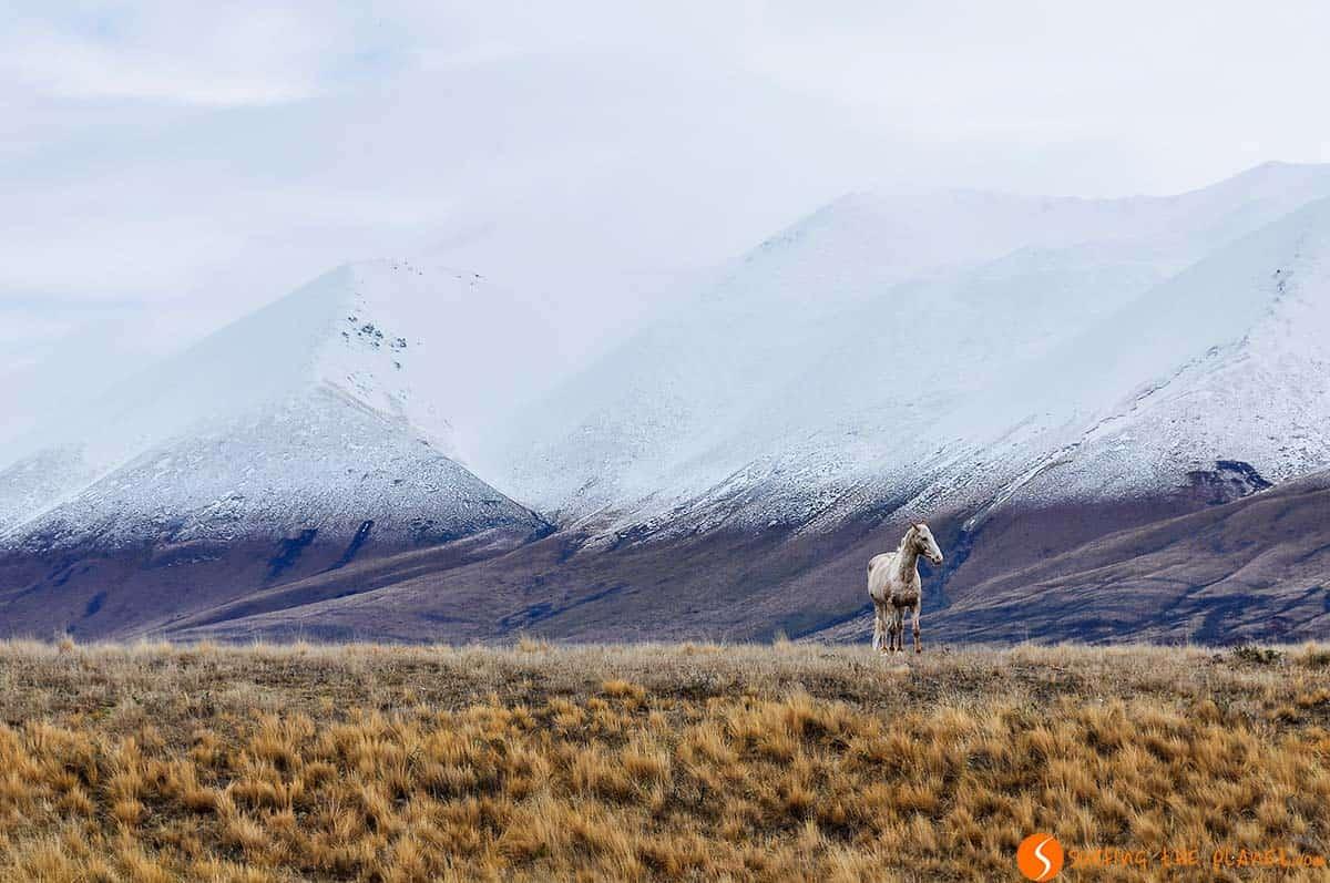 Caballo blanco, Wanaka, Nueva Zelanda | Viajar a Nueva Zelanda
