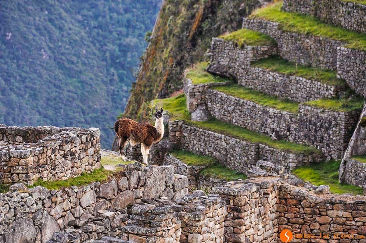 Todo que saber para tu viaje a Machu Picchu | Viajar por Perú