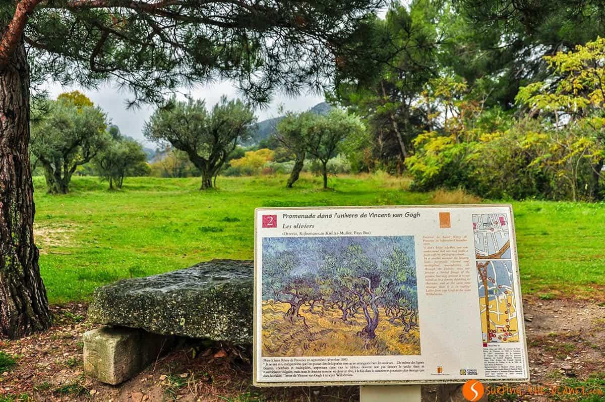 Olivar, Saint-Remy de Provence, Francia