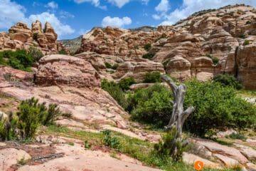 Rocas y árbol, Reserva de la Biosfera de Dana, Jordania