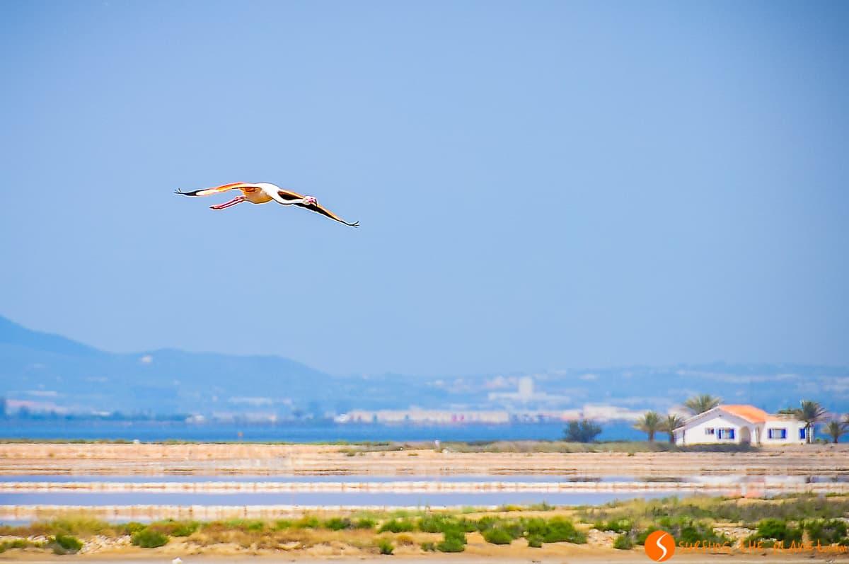 Flamenco volando, Delta del Ebro, Cataluña | 10 imprescindibles que ver y hacer en el Delta del Ebro
