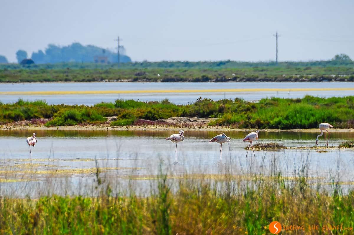 Flamencos, Delta del Ebro, Cataluña | Qué ver y hacer en el Delta del Ebro