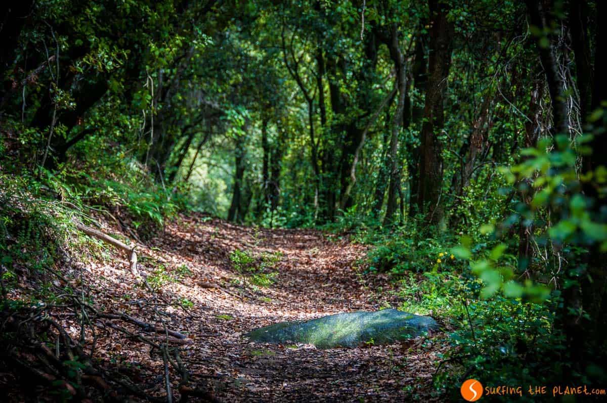 Sendero de bosque, La Garrotxa, Cataluña | Qué ver y hacer en La Garrotxa