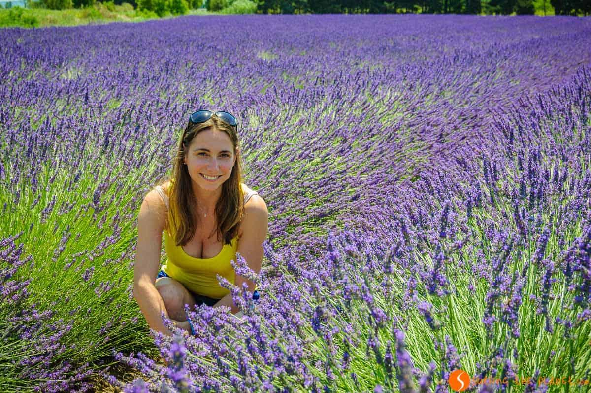 Rachele en campo de lavanda, Provenza, Francia
