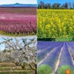 Los campos en flor más bonitos cerca de Barcelona - 5 Citas con las flores