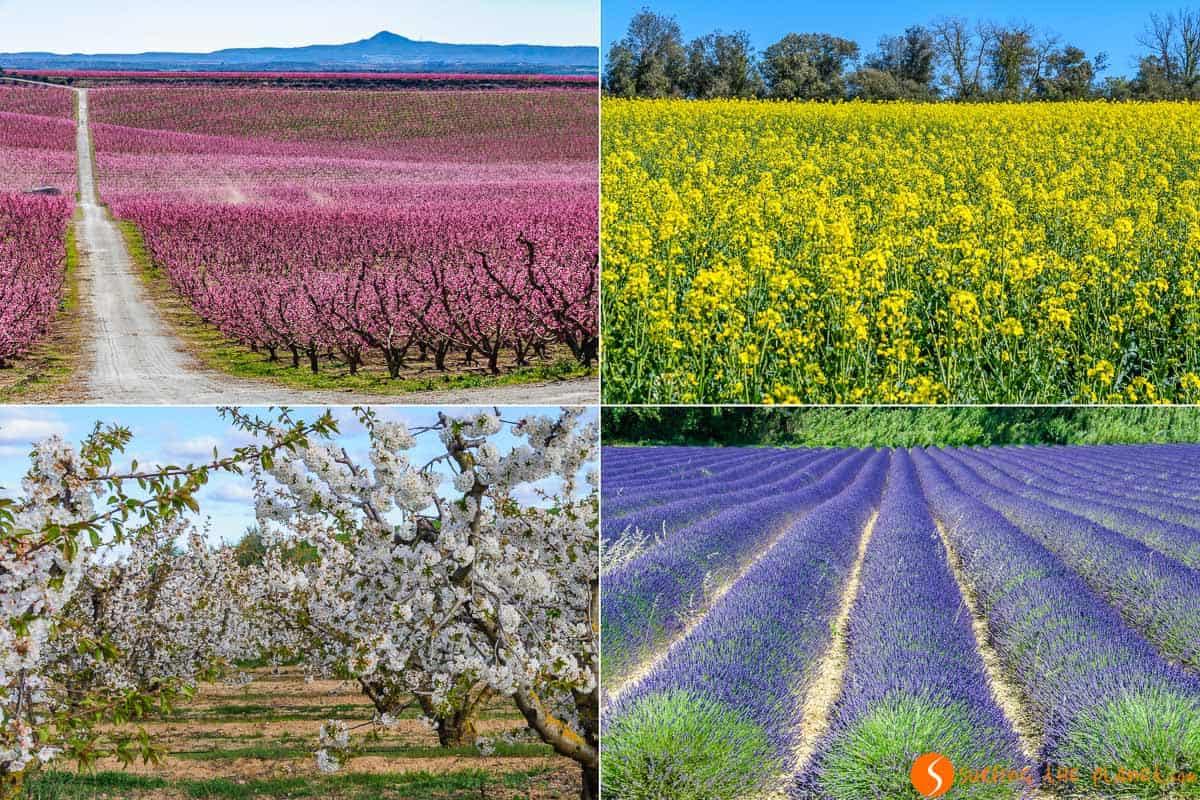 Campos en flor, Cataluña | Dónde ver campos en flor cerca de Barcelona