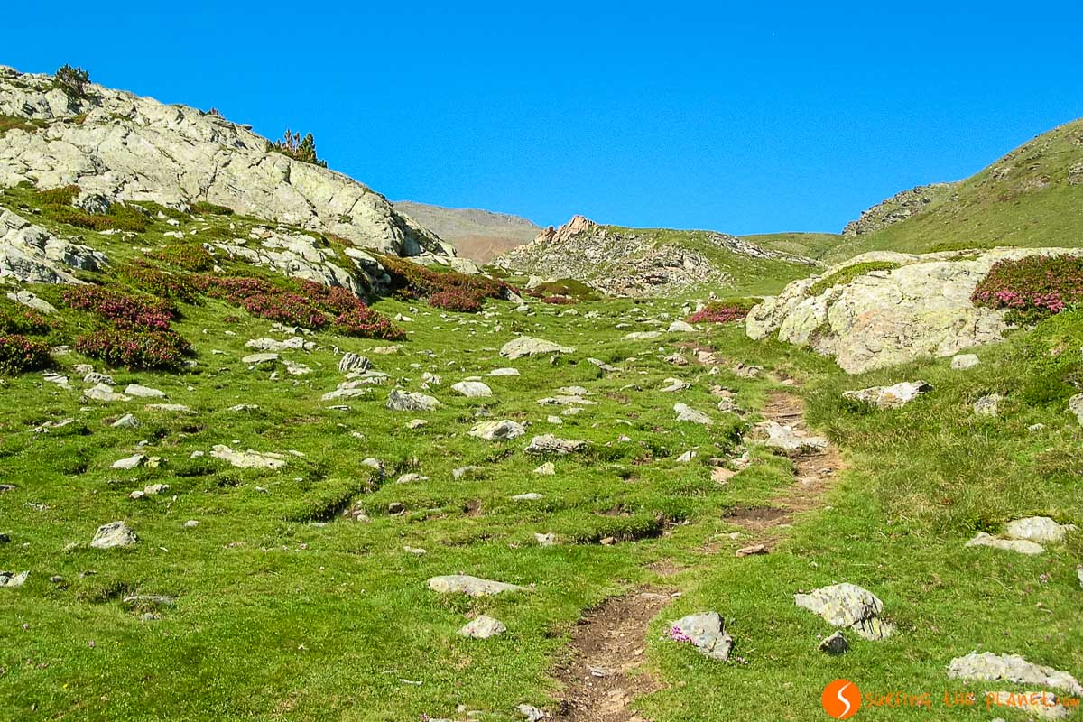 Paisaje verde en Puigmal, Vall de Núria, Cataluña, España