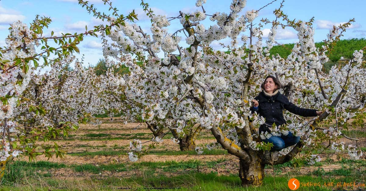 Rachele entre cerezos, Tivissa, Tarragona, Cataluña | Floriturismo cerca de Barcelona