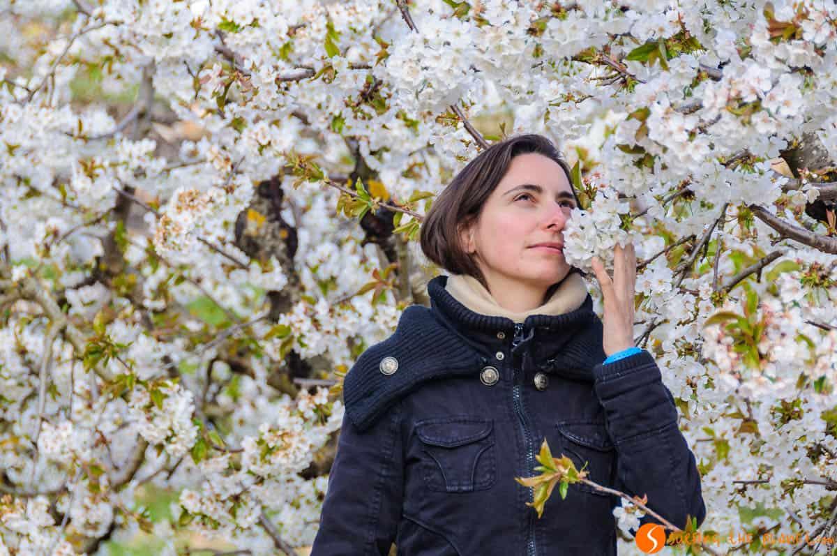 Rachele entre flores de cerezos, Tivissa, Tarragona, Cataluña | Campos en flor en primavera cerca de Barcelona