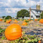 Visitar la comunidad de los Amish en Pennsylvania – Una excursión imprescindible en la Costa Este