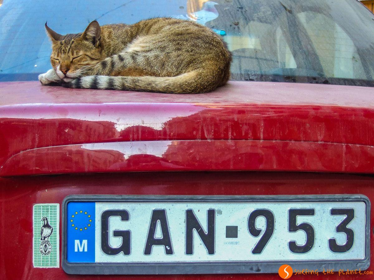 Gato relajado, La Valeta, Malta