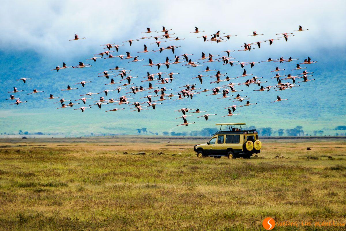 Flamencos volando, Cráter de Ngorongoro, Tanzania   Un día en el Ngorongoro