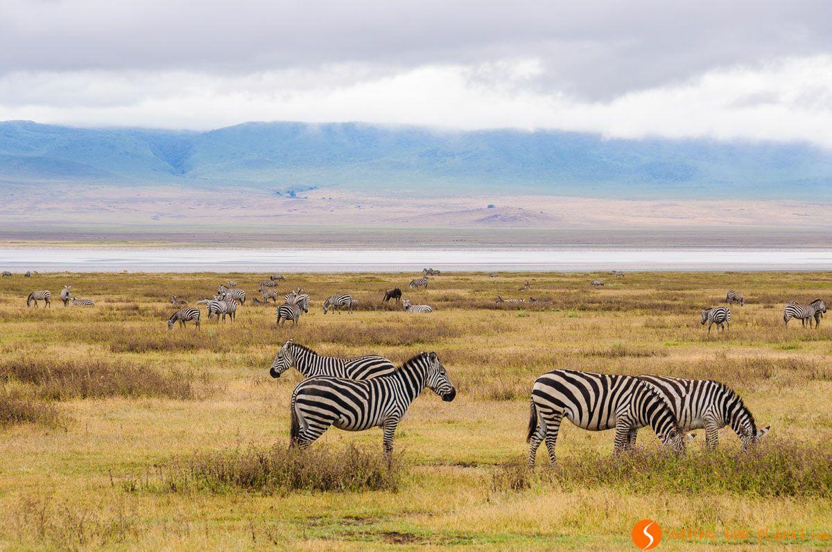 Paisaje con zebras, Cráter de Ngorongoro, Tanzania   Visitar el Cráter del Ngorongoro