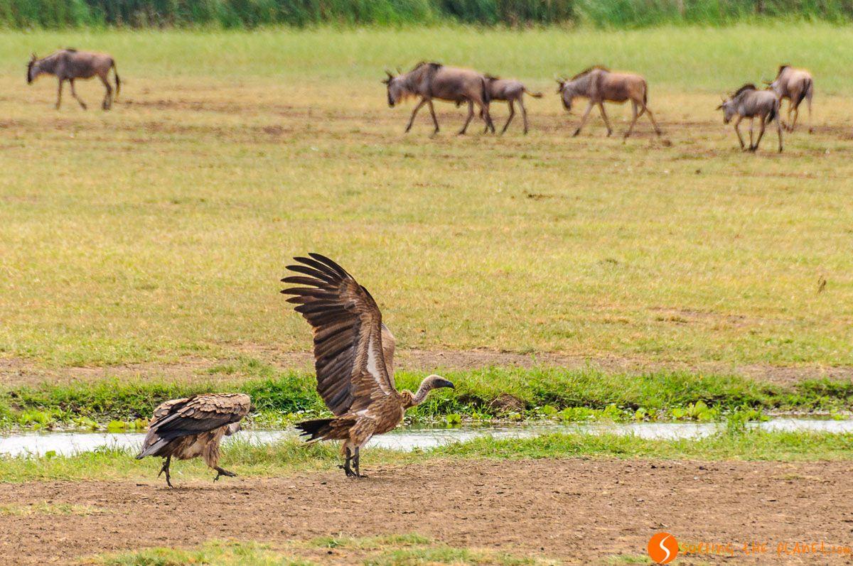 Animales, Lago Manyara, Tanzania