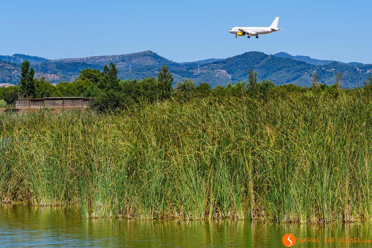 Avión aterrizando, Delta del Llobregat, Cataluña, España
