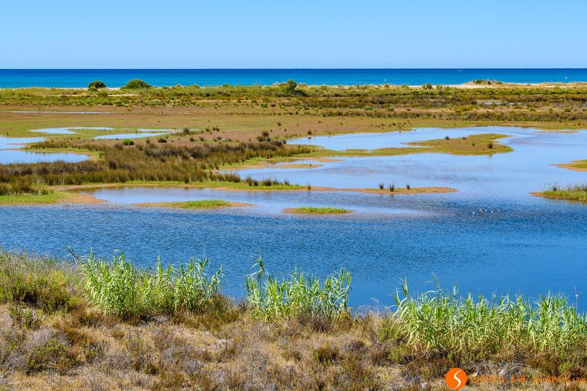 Paisaje con playa, Delta del Llobregat, Cataluña, España |Excursión al Delta del Llobregat desde Barcelona