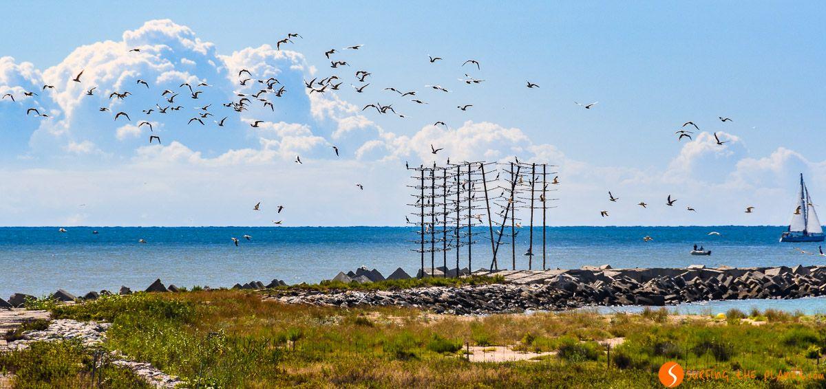 Grupo de pájaros, Delta del Llobregat, Cataluña, España
