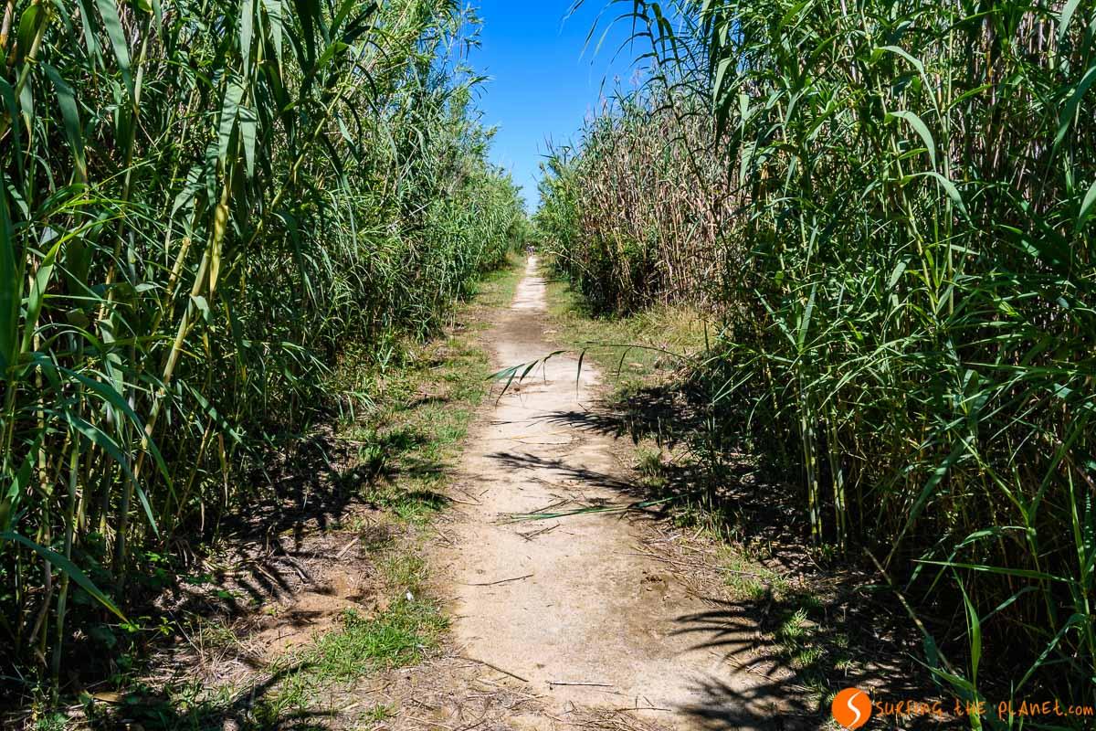 Sendero, Delta del Llobregat, Cataluña, España | Qué ver en el Delta del Llobregat