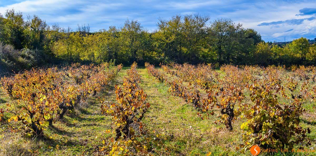 Otoño en los viñedos, El Penedès, Cataluña, España