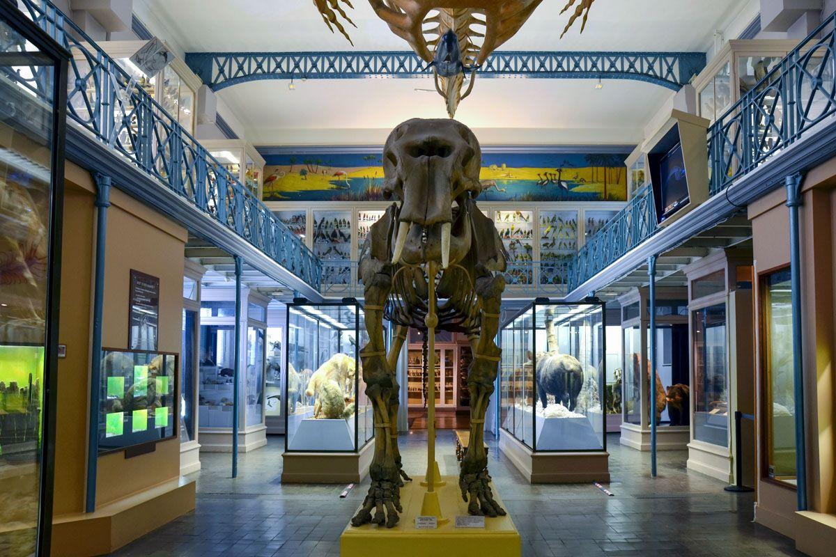 Museo Historia Natural, París, Francia