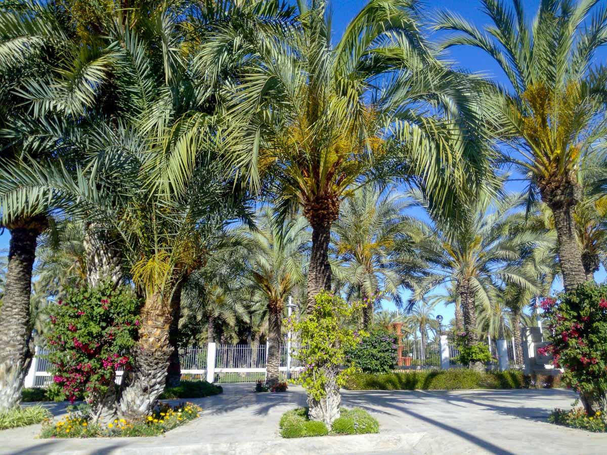 Palmeral, Elche, Provincia de Alicante, Comunidad Valenciana