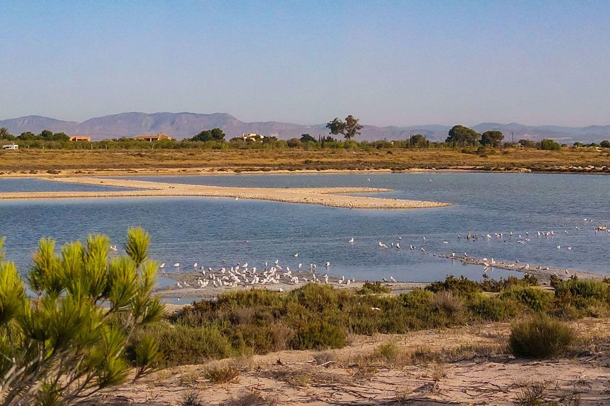 Salinas de Santa Pola, Provincia de Alicante, Comunidad Valenciana