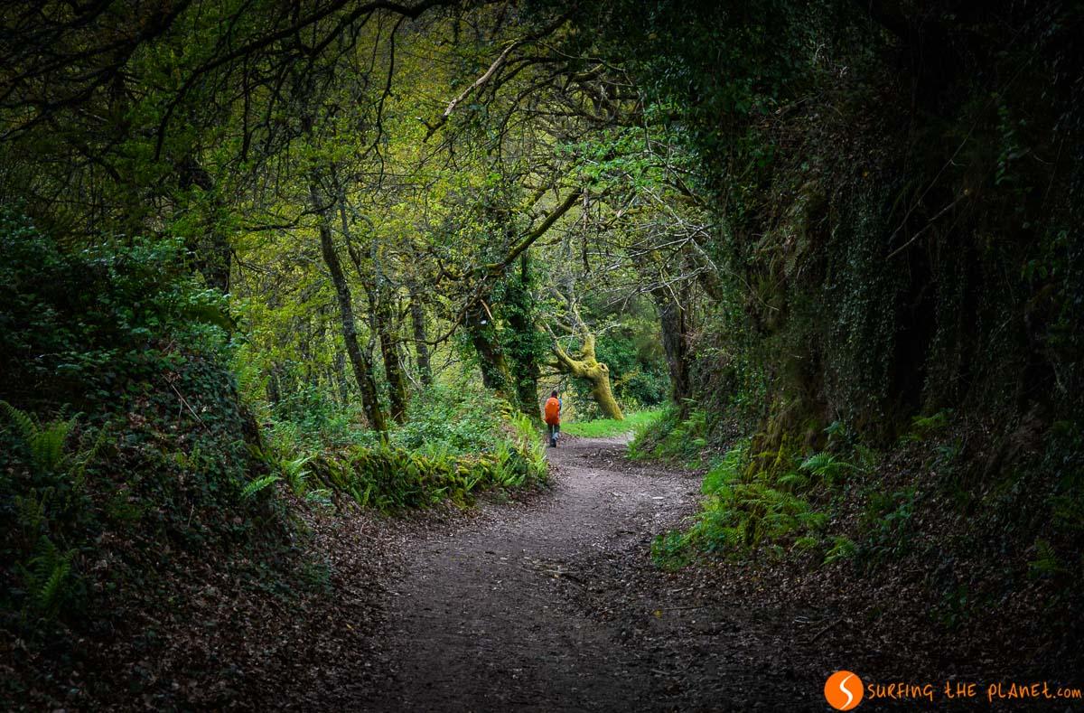Bosque en el Camino de Saniago, A Coruña, Galicia |Qué visitar en la Provincia de A Coruña
