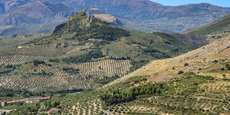 Paisajes de olivos, Jaén, Andalucía