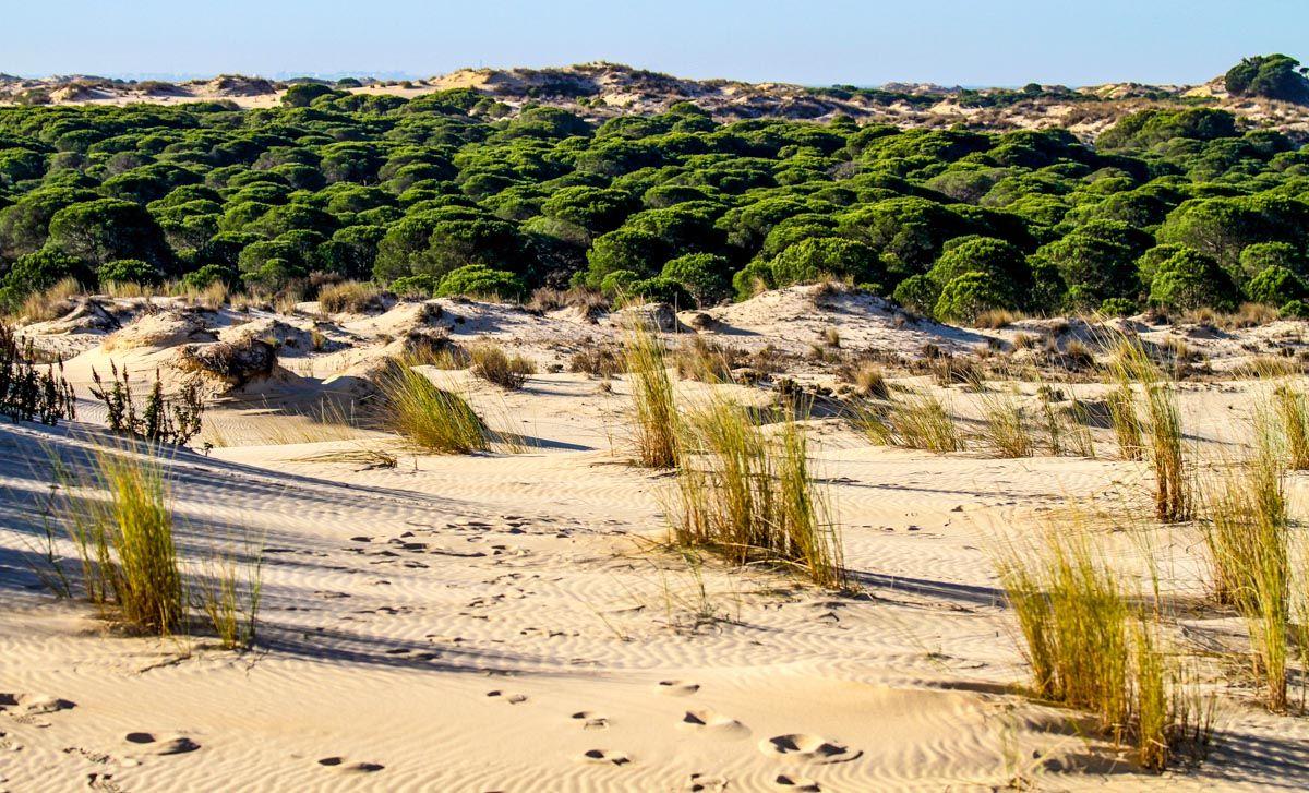 Parque Nacional de Doñana, Provincia de Huelva, Andalucía