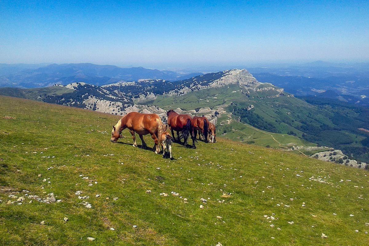 Parque Natural de Gorbea, Álava, País Vasco | Qué hacer en Álava Provincia