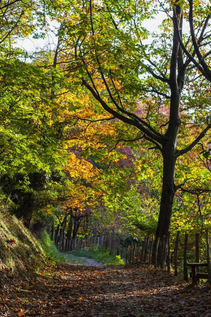 Parque Natural de Pagoeta, Guipúzcoa, País Vasco